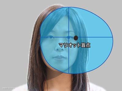 視野と盲点6