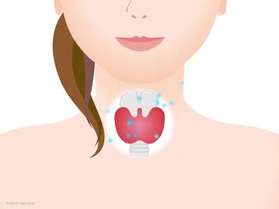 甲状腺の位置2
