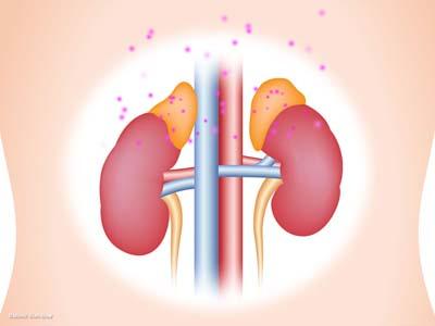 副腎皮質ホルモン2